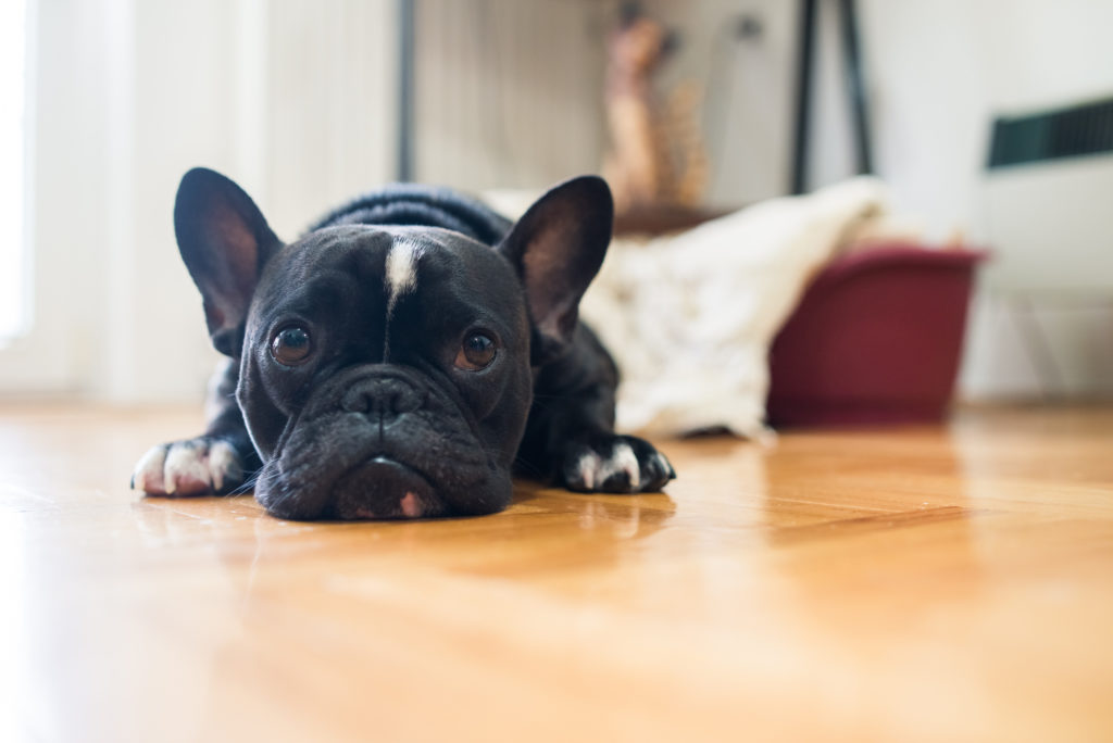 Affordable Dog Care Basics for a Happy, Healthy Pet